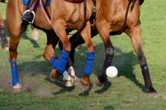 Horses playing soccer with the ball @CelinaLafuenteDeLavotha2014
