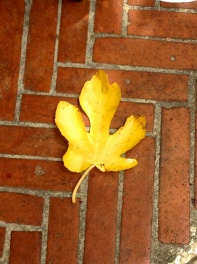 One yellow leaf does not make Autumn yet @CelinaLafuenteDeLavotha