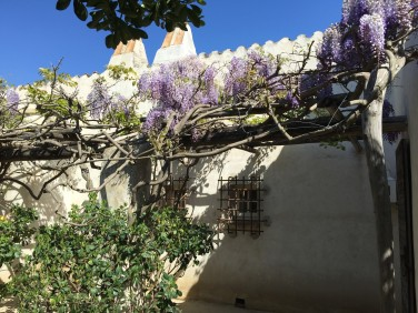 Wisteria decorating the walls @CelinaLafuenteDeLavotha