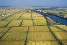 Air shot of rice plantation Camargue. Biosphoto / Régine Rosenthal