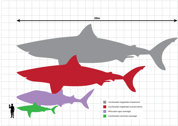 2000px-Megalodon_scale