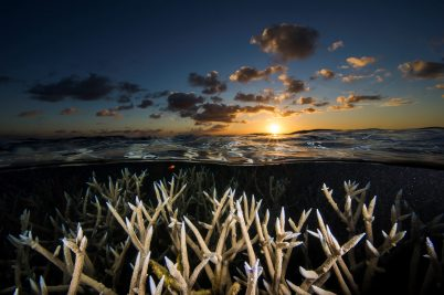 Sunset and staghorn coral - Exposition Tubbataha ©David Doubilet