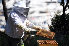 Beekeeper at work @Manuel Vitali, Direction Communication