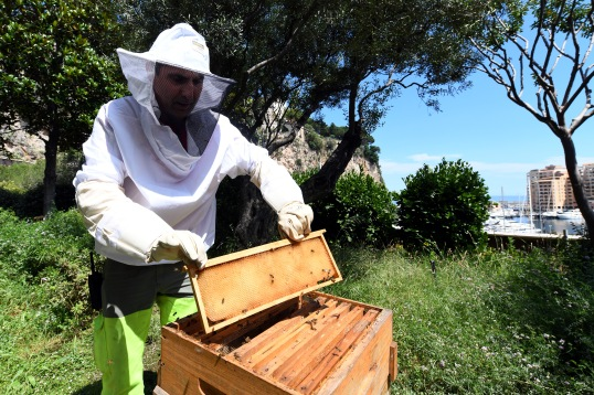 Beekeeper attending to the beehives in the @Manuel Vitali, Direction Communication