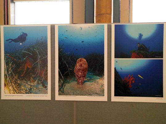 Photo exhibition at the UN @DR