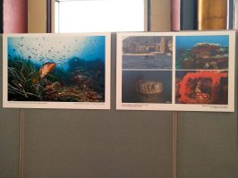 View of the photo exhibition at the UN @DR