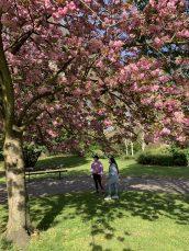 Pink masks and pink flowers, Kensington Gardens, London, UK, April 7, 2020 @Ella Montclare