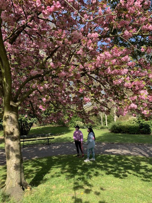 Pink masks and pink flowers, Kensington Gardens, London, UK, April 7, 2020 @Ella Montclare