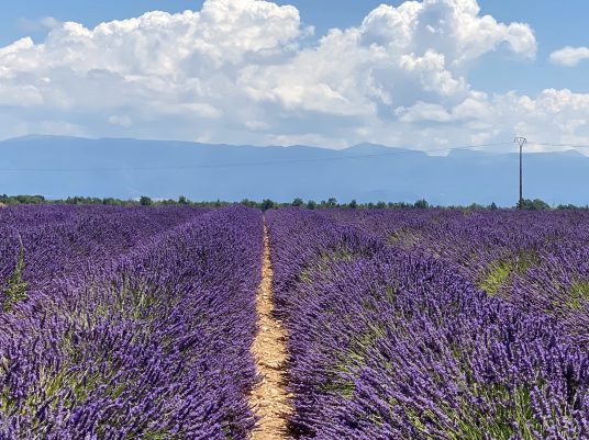 Lavender fields, mountains and clouds, Valensole, July 12, 2020 @CelinaLafuente de Lavotha