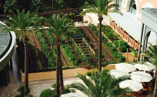 Vegetable garden at Monte-Carlo Bay @TDM