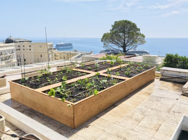 Vegetable garden on the roof a building in the Principality @TDM