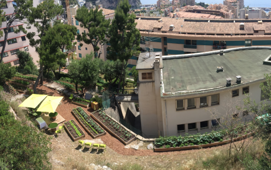 View of the vegetable garden at the Princess Grace Hospital @TDM