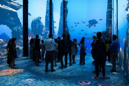 Visitors during inauguration of IMMERSION, Oceanographic Museum of Monaco, July 2020 @M_Dagnino